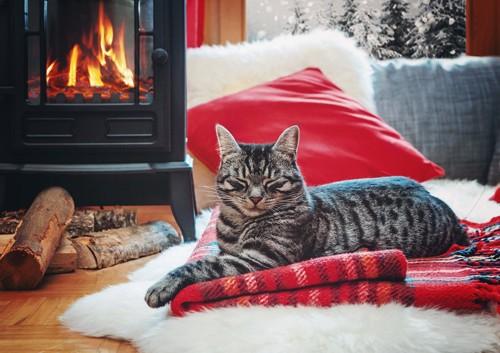 薪ストーブの前でぬくぬくしている猫