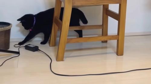 椅子の向こう側で遊ぶ猫