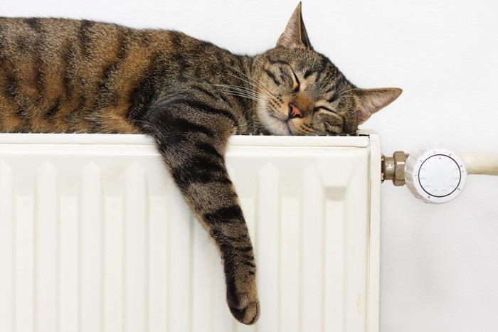 温かいラジエーターの上で眠っている猫