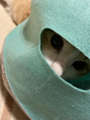 スケキヨ猫