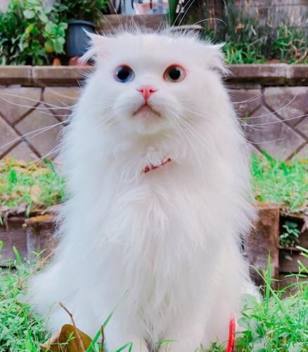 虹の橋を渡った白猫