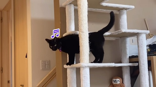 キャットタワーに立つ猫