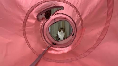 トンネルの先にいる猫と途中の穴からのぞく猫