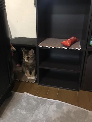 ボックス中で隠れたり、爪とぎ