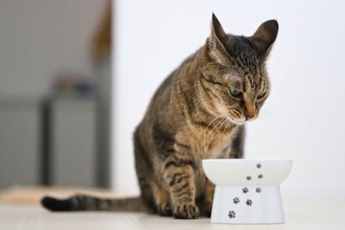 フードボウルを見つめる猫