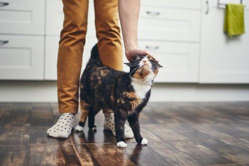 足元でなでられている猫