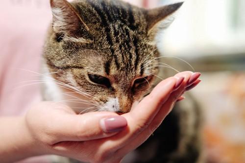 手から食べる猫