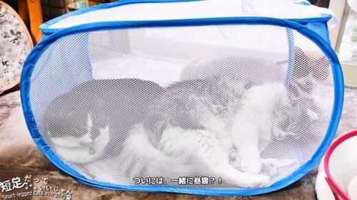 横になる猫と座る猫