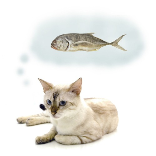 魚を思い浮かべる猫
