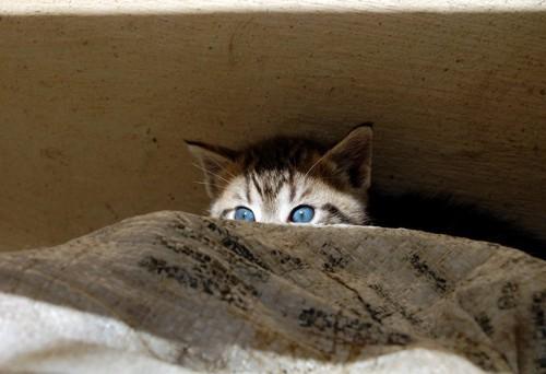 隠れている子猫
