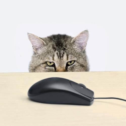 コンピューターマウスを狙う猫の目