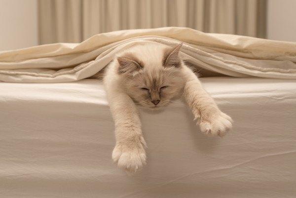 ベッドで寝る猫