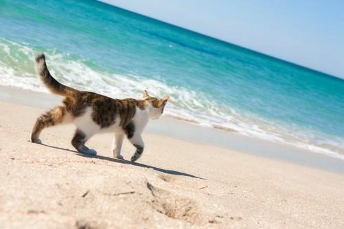 ビーチにいる猫