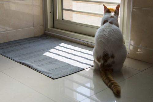 お風呂のドアの前にいる猫
