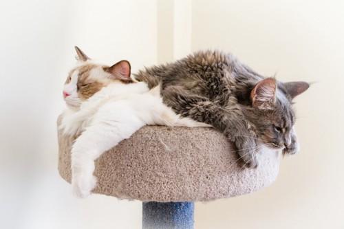 ぐったりした様子の2匹の猫