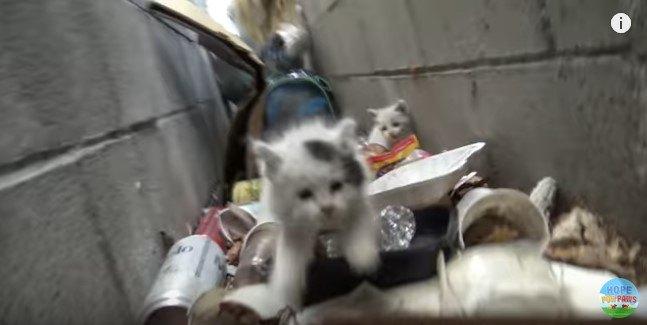 カメラに向かって突進する子猫
