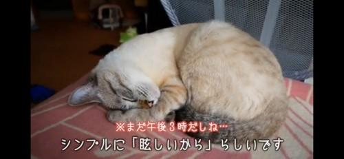 遊び疲れて寝る