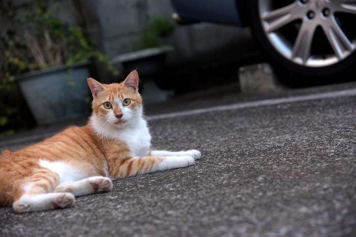 外でくつろぐ野良猫