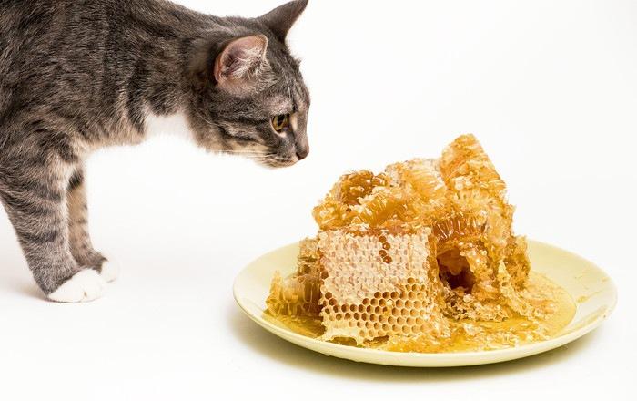 蜂の巣とはちみつと猫