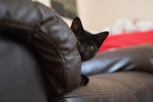 黒いソファーから顔だけ出す黒猫