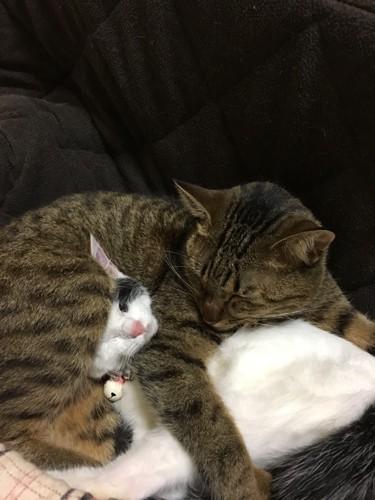 一緒に眠るキジトラと白黒ぶち