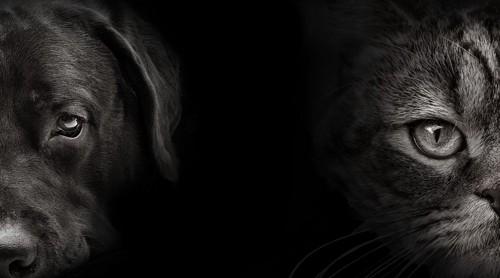 猫と犬の顔のアップ