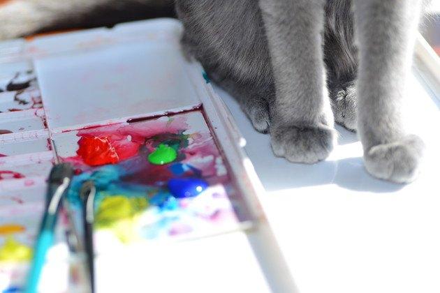 絵の具と猫