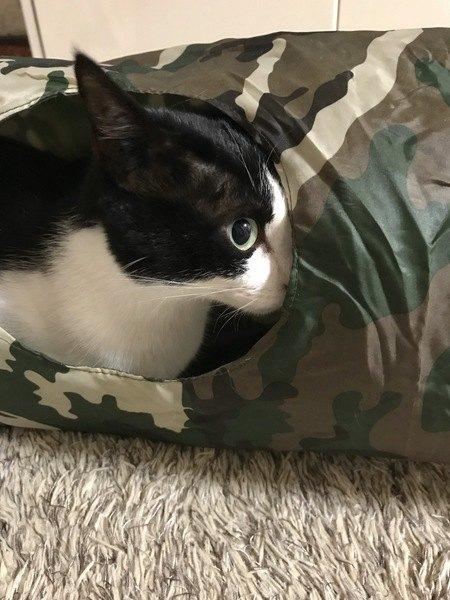 トンネルから顔半分を覗かせる猫