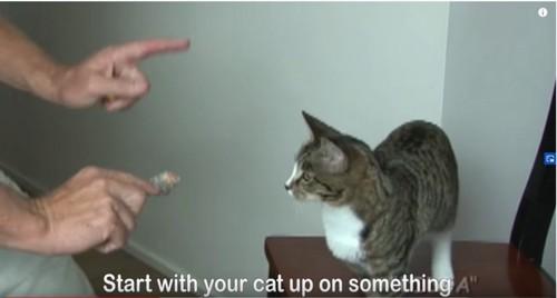 椅子の上に立っている猫