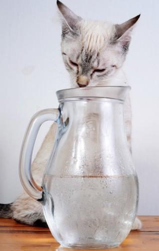 水滴のついたグラスと猫