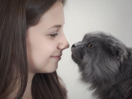女性の顔の匂いを嗅ぐ猫