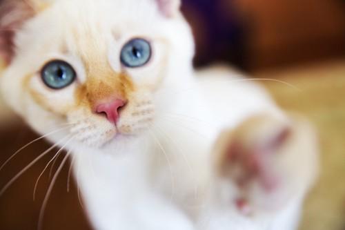 手を伸ばす猫