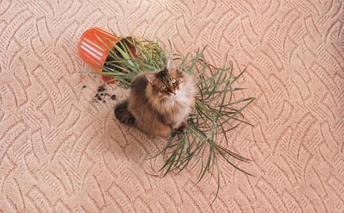 倒れた鉢植えと見上げる猫