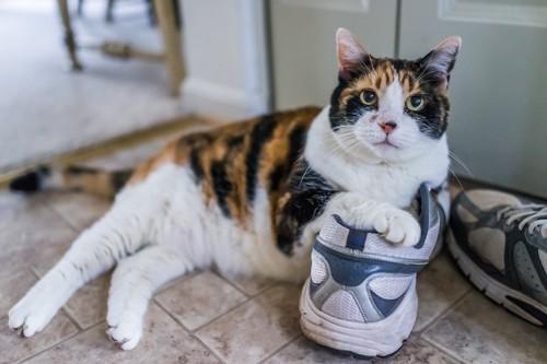 靴に手をかけてくつろぐ三毛猫