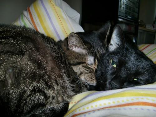 キジトラと黒猫
