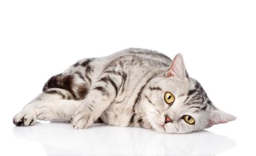 体調が優れなさそうな猫