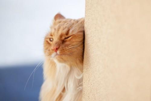 壁に体をこすりつける猫