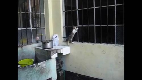迷ってる子猫