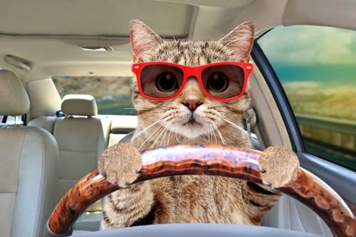 運転する猫