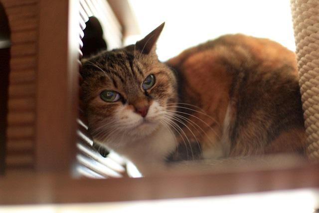 シニアと呼ばれる年齢の猫