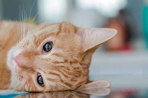 元気が無くてぐったりした様子の猫