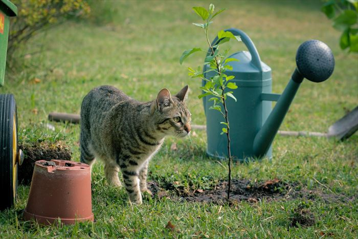 庭にいる野良猫