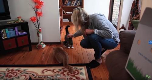 2匹の猫と女性