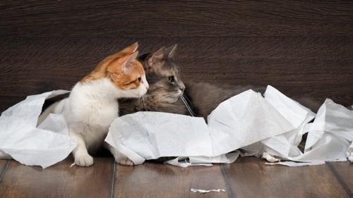 猫のイタズラ現場