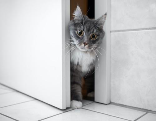 ドアの隙間から部屋に入る猫