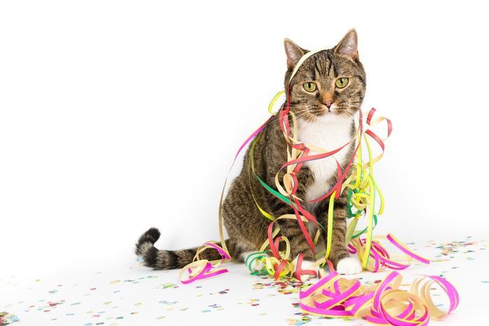 紙テープを巻きつけた猫
