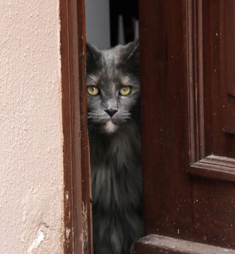 玄関の扉から見つめる猫