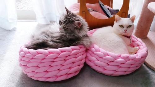 ベッドに入るグレーの猫と白猫