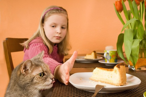 テーブルの上のケーキを狙う猫と制止する女の子