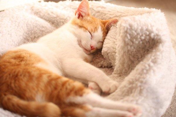 毛布の上で眠る猫